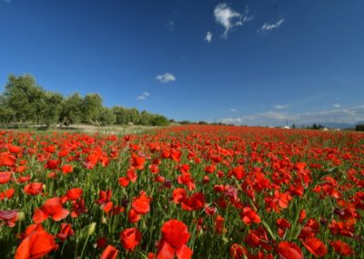 Spanien, Andalusien, Mohn-Light