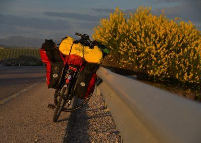 Spanien, Andalusien, Ginster in Blüte - ein intensiver Geruch