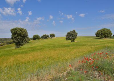 Spanien, Provinz La Mancha, etwa 1000 m Höhe (Hochplateau)