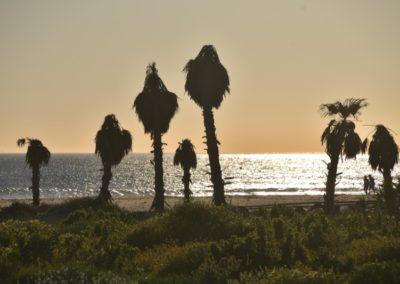 Spanien, Tarifa, Palmen im Abendlicht